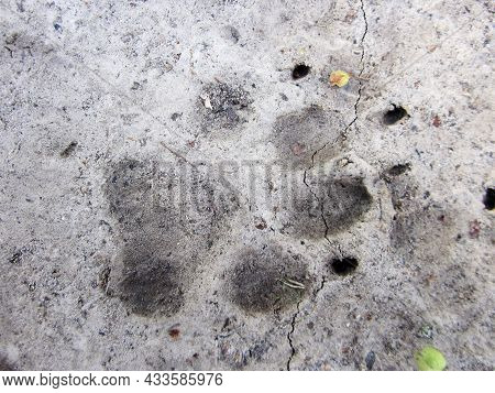 Photography To Theme Big Footprint Animal Dog Close Up