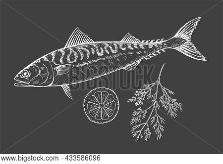 Sea Fish Mackerel With Lemon And Dill On A Black Background. Cooking Delicious Food. Vector Chalk Il