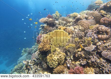 Colorful, Picturesque Coral Reef At The Bottom Of Tropical Sea, Hard Corals And Fishes, Air Bubbles,