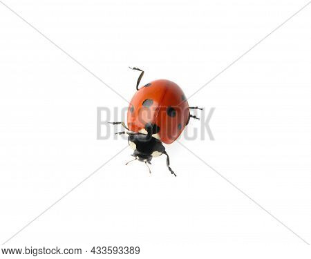 Beautiful Red Ladybug Isolated On White, Top View