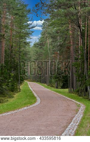 The Road Through The Pine Forest In Summer Near The Resting Place