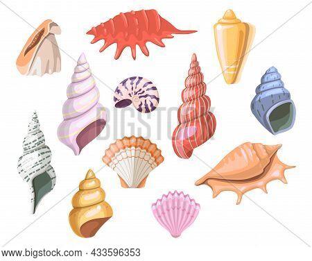 Shells Of Sea, Seashell And Marine Snail Scallops, Vector Ocean Beach Clams. Sea Shells Collection O