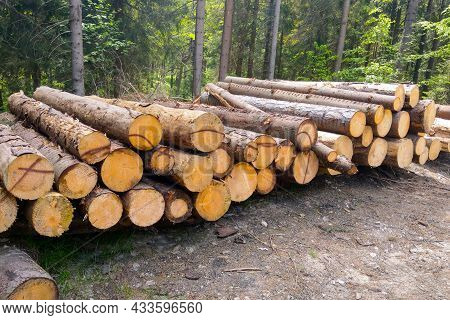 Trunks Of Felled Trees Close-up. Deforestation, Destruction Of Nature. Industrial Applications