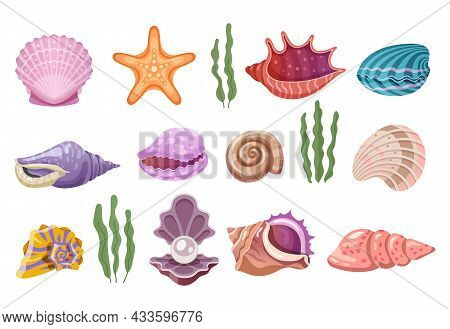 Shells Of Sea, Pearl Seashells And Marine Clams, Vector Ocean Starfish Mollusk. Beach Shell, Scallop