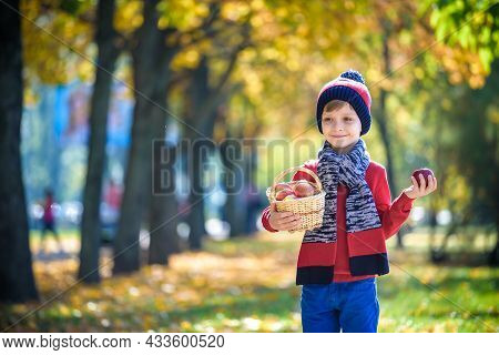 Child Picking Apples In Autumn. Little Baby Boy Playing In Apple Tree Orchard. Kids Pick Fruit In A