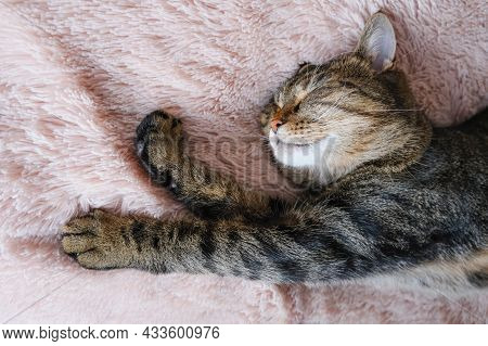 The Tabby Cat Sleeps On A Beige Fluffy Bedspread. Close Up.
