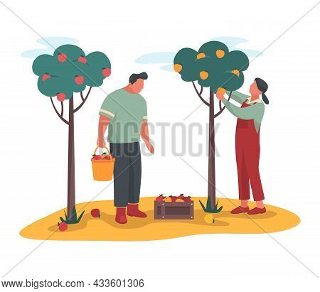 Gardeners Pick Apples Or Gathering A Ripe Crop