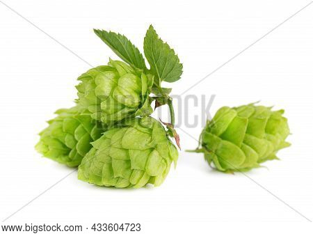 Fresh Green Hops Branch, Isolated On A White Background. Hop Cones With Leaf. Organic Hop Flowers. C
