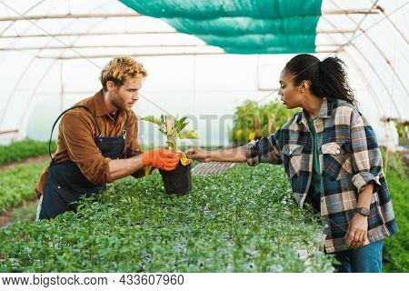 Middle aged multiethnic couple of farmers working in a greenhouse together holding plants