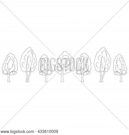 A Black Outline Hand Drawing Vector Illustration Of A Group Of Deciduous Birch Trees Isolated On A W