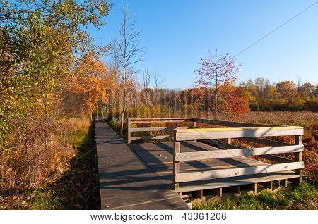 Trail Overlook