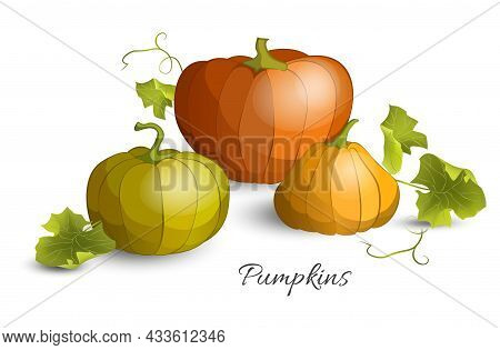 Three Pumpkins With Leaves For Thanksgiving Or Halloween Day. Fall Harvest Pumpkins. Banner Design T