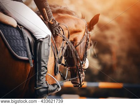 A Rider Rides A Fast Bay Racehorse In The Saddle, Holding Its Reins With His Hands On A Sunny Day. E