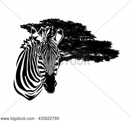 Wild African Zebra Head And Wide Savannah Tree Branches In The Background - Black And White Animal V