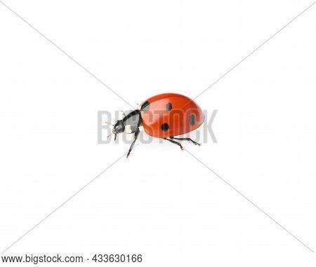 One Beautiful Red Ladybug Isolated On White