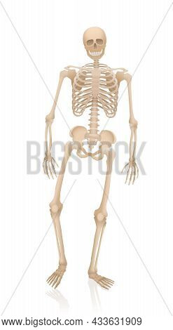 Walking Skeleton - Alive, Creepy, Spooky, Frightening, But With A Friendly Smile. Anatomical Proport