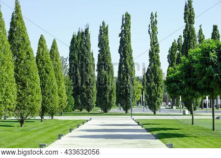 A Beautiful Alley In The City Park With Green Grass And Cypresses