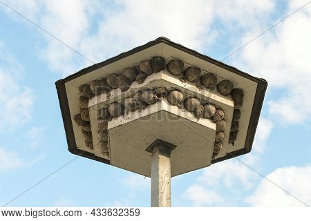Swallow Hotel, Stepped Roof Overhangs With Artificial Nesting Aids Made Of Concrete And Natural Nest