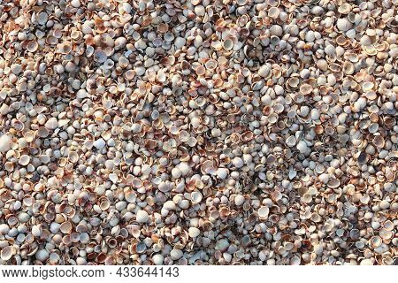 Summer Background Of Wet Shells On Beach At Dawn In Soft Sunlight For Travel Advertisement Or Summer