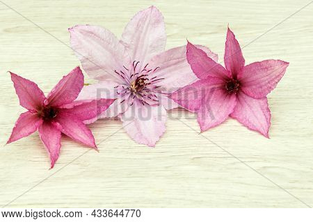 Flower Arrangement Of Inflorescences Of Blooming Clematis On A Wooden Background.