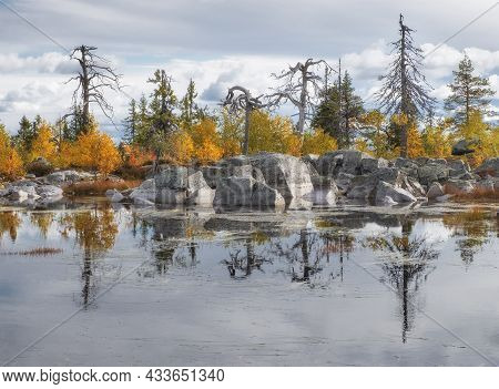 Living And Dead Twisted Trees Are Reflected In The Water Of A Lake At The Top Of The Mystical Mounta
