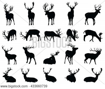 Graphic Black Silhouettes Of Wild Deers On A White Background