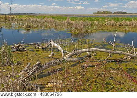 Vast Wetland Marsh On A Sunny Day At Horicon Marsh In Wisconsin