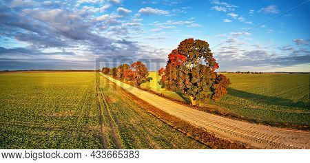 Autumn Rural Panorama. Fall Colors Beautiful Trees Dirt Road Agriculture Fields. September Sunny Mor