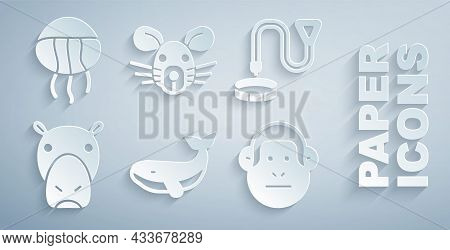 Set Whale, Collar With Name Tag, Hippo Or Hippopotamus, Monkey, Rat Head And Jellyfish Icon. Vector