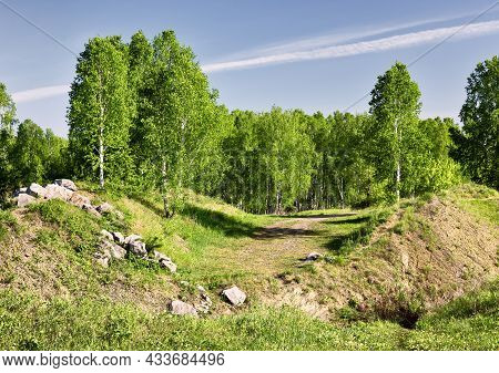 Young Birches With Fresh Spring Foliage, Stones On The Hills, Blue Sky, Bright Sunlight Early In The