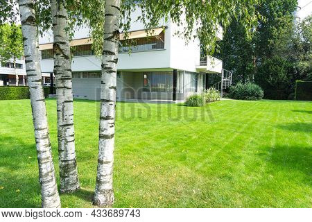 Rotterdam Netherlands - August 23 2017; Group Three Silver Birch Trees In Residential Landscaped Gro