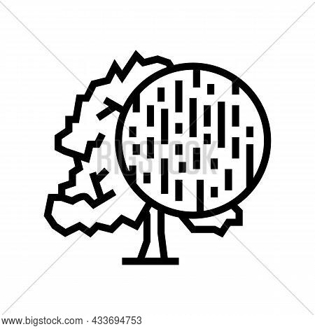 Beech Wood Line Icon Vector. Beech Wood Sign. Isolated Contour Symbol Black Illustration