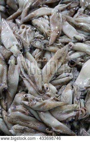 Raw fresh squid. Whole Squid. Squid for sale in a Fish Market. Sea Food Farmers Market.