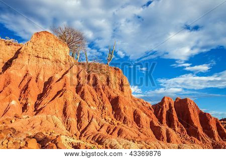 Red Desert And Cactus