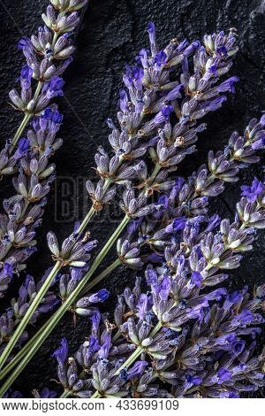 Lavender In Bloom, Lavandula Flowers, Shot From The Top On A Black Background, Aromatic Plant Bouque