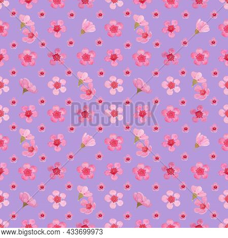 Pink Petals Of Wax Flower Blossom Seamless Pattern Illustration, Watercolor Flora Painting On Pastel