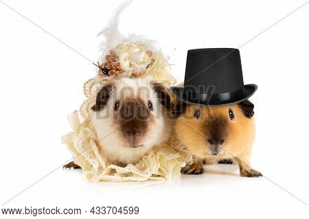 Funny Couple Of Guinea Pigs In Clothes Isolated On A White Background