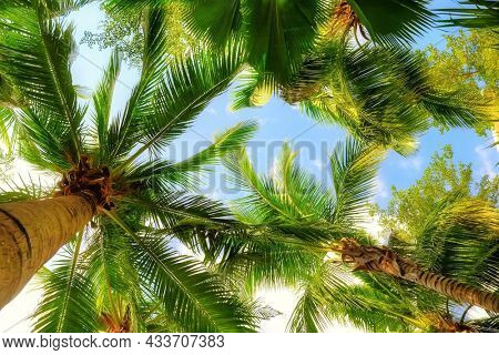 palm trees on blue sky and white clouds