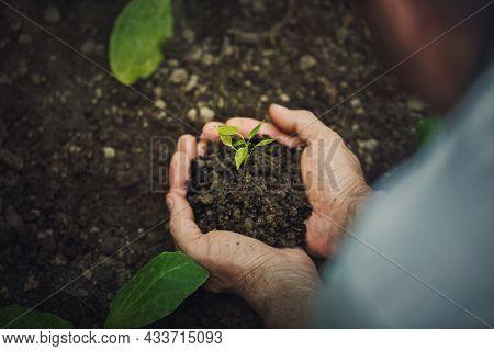 Senior Man Gardening As Holds Fertile Soil In His Hands With Growing Green Seedling. Spring Garden P