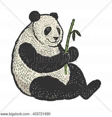 Panda Bear With Bamboo Color Sketch Engraving Vector Illustration. T-shirt Apparel Print Design. Scr