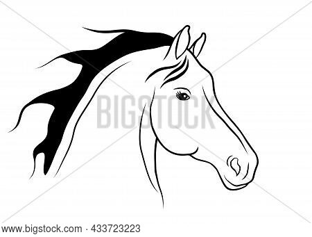 Beautiful Horse Portrait Is On A White Background.