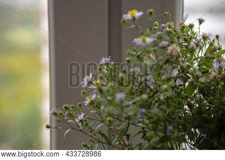 Abstract Floral Background. Small Autumn Lilac Asters On The Background Of The Window. Close-up, Cop
