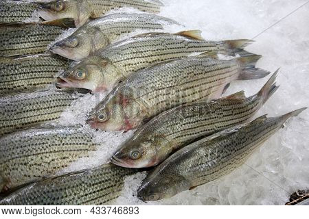 Whole Mullet for sale. Fish for sale. Sea Food Market. Fish Market. Farmers Market.