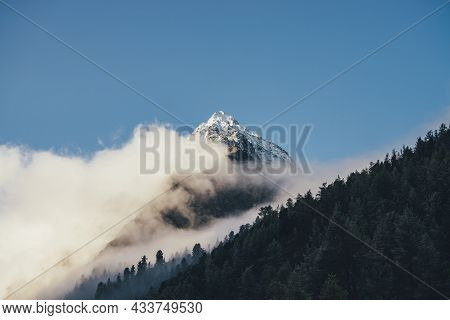 Beautiful Mountain Landscape With Sharp Pinnacle With Snow Above Dense Low Clouds And Coniferous For