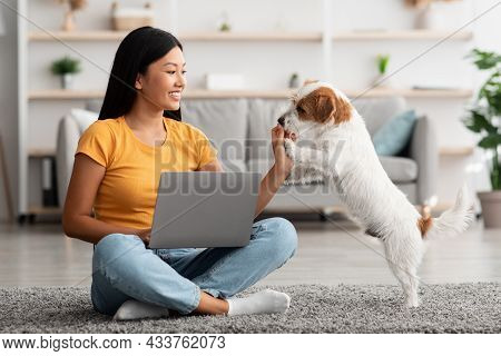 Asian Woman Watching Tutorial For Dogs Training, Using Laptop