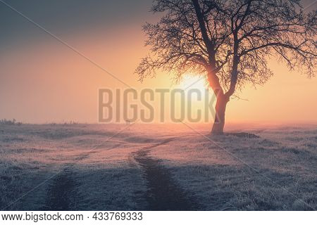 Road In The Winter Forest At Sunrise. Frosted Tree In Foggy Morning. Beautiful Winter Landscape. Sou