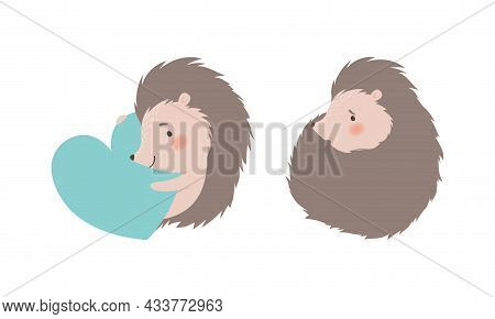 Funny Grey Hedgehog Curled Up And Embracing Heart Vector Set