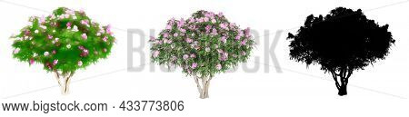 Set or collection of Crape Myrtle trees, painted, natural and as black silhouette on white background. Concept or conceptual 3d illustration for nature, ecology and conservation, strength or endurance
