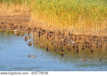 Nature environment with Ducks and birds in Estartit Spain