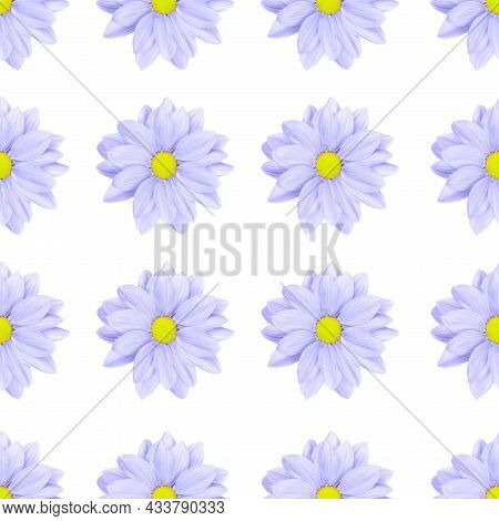 Pastel Purple Or Lilac Flower Floral Seamless Pattern Isolated On White Background. Chamomile Or Chr